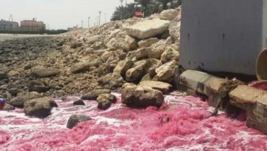 صورة مصبات مخالفة لكورنيش سيهات .. و30 مليونا غرامة المتجاوزين